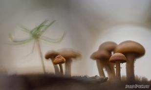 Gombacsalád  (Fotó: Potyó Imre)