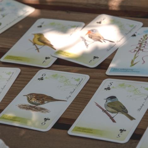 A DINPI védett madarai francia kártya
