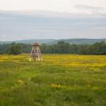 Az Ipoly torony (fotó: Selmeczi-Kovács Ádám)