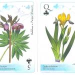 A Duna-Ipoly Nemzeti Park védett növényei, francia kártyacsomag