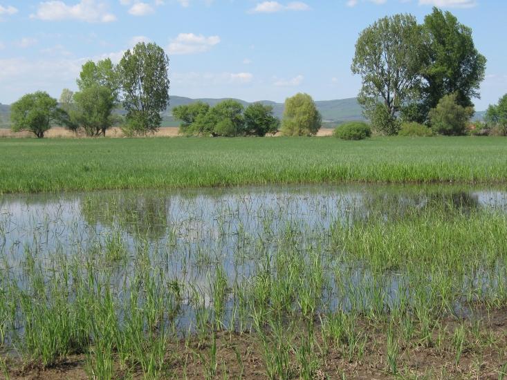 Ipoly-völgy (fotó: Selmeczi-Kovács Ádám)