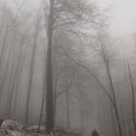Ködbe veszve I. (fotó: Sevcsik András)