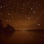 Megfigyeléseink szerint tavaly nyáron volt az eddigi legerősebb dunavirág rajzás 2012-óta, ugyanis a vízfolyásoktól sok-sok kilométerre, bent a településeken is megjelentek csóváik a lámpák alatt. A képen egy milliós kompenzációs rajt láthatunk a felsőgöd