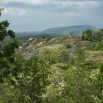 A Borbás-gerinc fokozottan védett területe