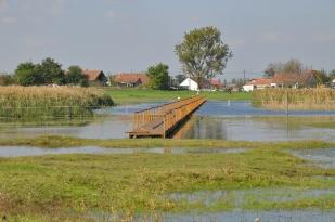 A dinnyési Madárdal tanösvény hídja