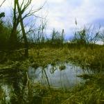 Egykori láp maradványa Isaszegnél a Rákos-patakon