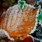 A fagyos novemberi reggel dérrel díszíti a leveket (Fotó: Potyó Imre)
