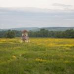 Torony az Ipoly-völgyben (Fotó: Selmeczi Kovács Ádám)