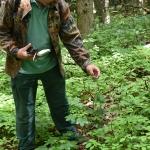 Az út során megismerhetjük az erdő minden hasznos, illetve ehető növényét is (Fotó: Láng Petra Zsófia)