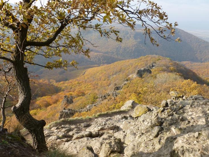 Vadálló kövek (Fotó: Dr. Jankainé Németh Szilvia)