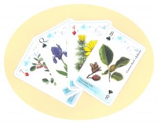 DINPI Növények francia kártya
