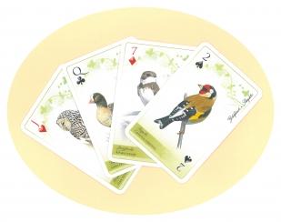 A Duna-Ipoly Nemzeti Park Igazgatóság védett madarait bemutató francia kártyacsomag
