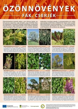 Özönnövények Fák, cseréjék