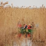 Csónakázás a nádasban a Békamentés rendezvényen (fotó: H. Kolláth Mária)