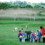 Gyerekcsoport a rackajuhoknál (fotó: H. Kolláth Mária)