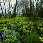 Égerliget a domonyvölgyi Egres-patakon