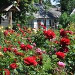 Rózsák kertje gyönyörű panorámával