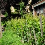 Kadarkáink kertje (fotó: Halász Ferenc)