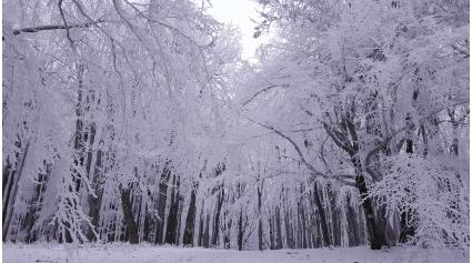 Börzsöny télen (Fotó: Tarjányi Nikolett)