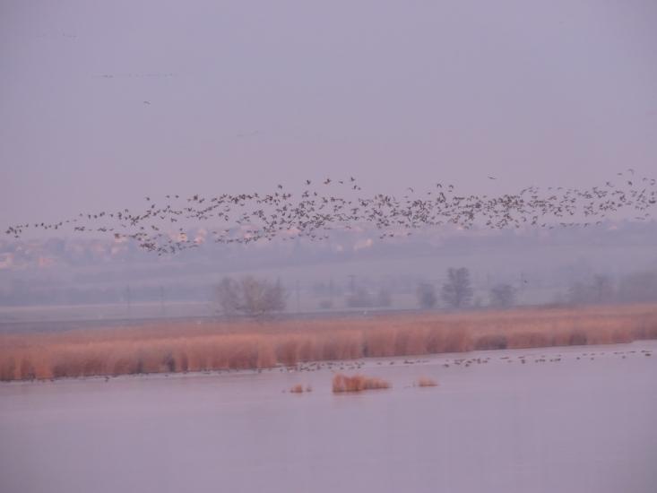 Esti vadlibahúzás a Dinnyési-fertőn (Fotó: Polgár Márta)