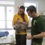 Arthurt a Fővárosi Állat és Növénykert Madárkórházába szállították (Fotó: dr. Hegyi Zoltán)