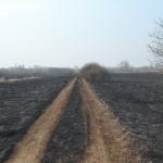 Farmosi tűz (Fotó: Nádai Zsombor)