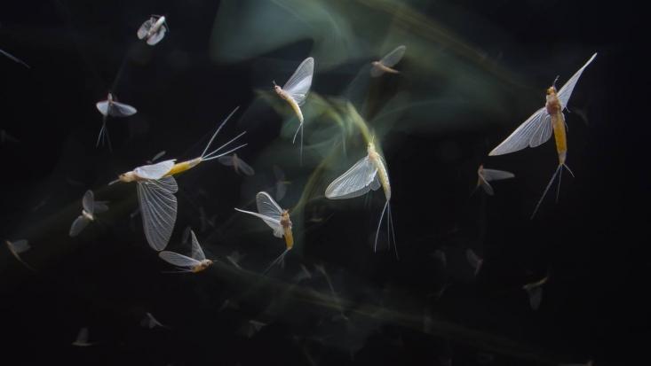 Dunavirágok tánca (Fotó: Potyó Imre)
