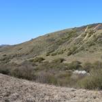 A Siklóernyő-hegy, a ráncos gyászbogár és a szarvas álganéjtúró újonnan felfedezett élőhelye 2019 áprilisában (Fotó: Merkl Ottó)