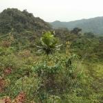 Nyungve Nemzeti Park hegyvidéki esőerdője (Fotó: Klébert Antal)