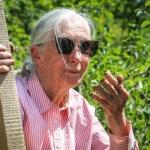 Jane Goodall látogatása a Sas-hegyen (Fotó: Balogh Boglárka)