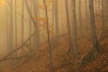 Ősz a Börzsönyben (Fotó: Potyó Imre)