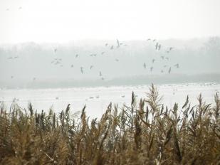A Dinnyési-fertő télen (Fotó: Pethő Csilla)