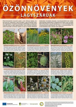 Özönövények - Lágyszárúak
