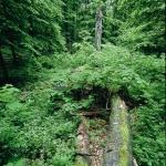 Erdőkép (fotó: Kalotás Zsolt)