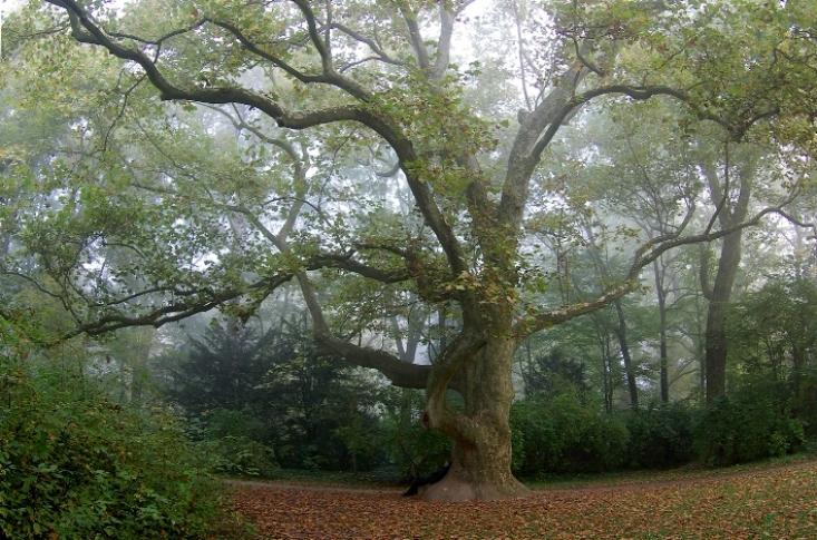 A három plebejus fa