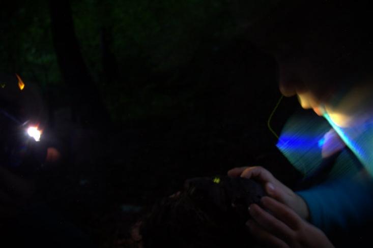 Szentjános-bogár túra Királyréten (Fotó: Sevcsik András)