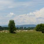 Páskom-legelő