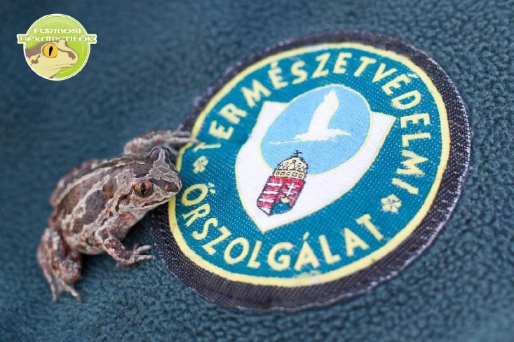 Barna ásóbéka a Természetvédelmi Őrszolgálat logójával (fotó: Morvai Szilárd)
