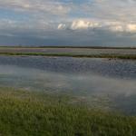 A tápiógyörgyei Gulya-gyep az Egyesült-Tápió áradásakor