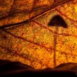 Gomba árny az avarban (Fotó: Potyó Imre)
