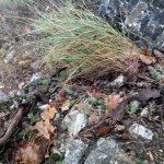 Mini kaktusz egyedek (Fotó: Novák Adrián)
