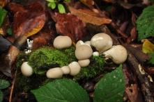 Októberi gombák a Börzsönyben