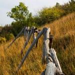 A Strázsa-hegy oldalában (fotó: Szax Zsolt)