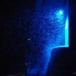 A világon elsőként beüzemelt fénysorompó a tahitótfalui Tildy Zoltán hídnál. Az eszköz hatására a kérészek jóval kisebb számban repülnek fel az aszfaltút feletti lámpákhoz, így végül legtöbbjük megmenekülhet. (Fotó: Farkas Alexandra)