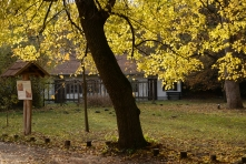 Jókai kert ősszel