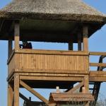 Madármegfigyelőtorony a tanösvényen a tó partján