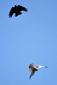 Sas-hegy madárdetektív