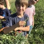 Hiúz tábor - gyógynövények begyűjtése