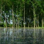Égerláp erdő