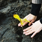 Őshonos fafajták ültetésével hozzájárulunk a biodiverzitás helyreállításához -  Fotó: Simon Alíz, Nanushka Zrt.